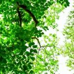 石神井公園プランチュールのお得なGWキャンペーンと営業時間のお知らせ♪